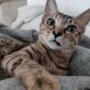 一只猫咪寻求领养