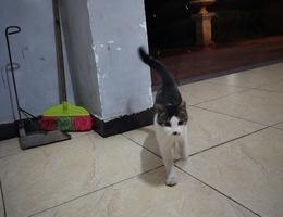 恒隆国际5栋有一只狸花猫