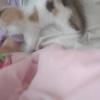一只三色可爱小猫 等待一个美丽的主人