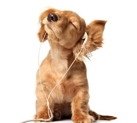 英国可卡犬|英卡,可卡,英国长毛獚
