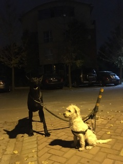 弟弟:弟弟 捡来的串儿,特别乖,跟他很有缘。 特别懂事的一只小狗