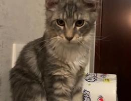 寻猫启事 本人于2018年12月25日...