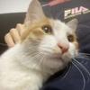 流浪猫找领养