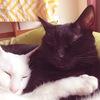 给2只猫找一个幸福的家
