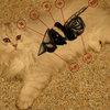 猫咪常见病的防治