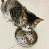 我有一只虎斑猫,希望有心人领养它!