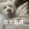 江宁河海大学附近捡到的小狗