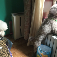 栗子:跟狗阿能弟弟一起骂楼下的皮皮