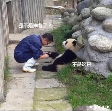 世界上最容易被抱大腿的工作:熊猫驯养师。12
