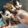 4只小奶貓 兩公兩母