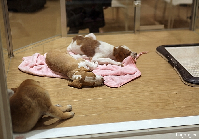 跨国看门道,推敲日本宠物店的经营模式4