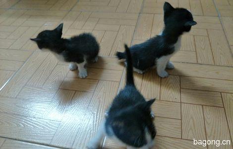 爱猫人士可免费领养哇~3