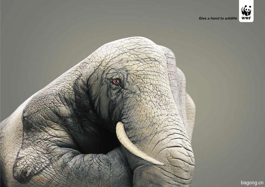 33个动物公益广告震撼人心40