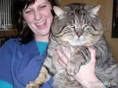 傻肥猫流浪记   变胖原来是吃了半年的狗粮!7