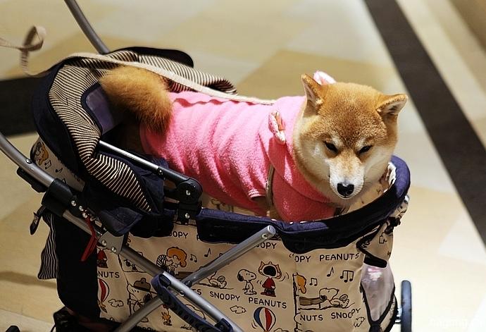 跨国看门道,推敲日本宠物店的经营模式25