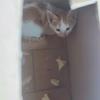 一个月大的小猫咪求领养