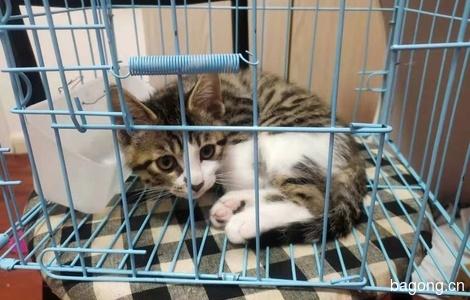 猫咪送养0