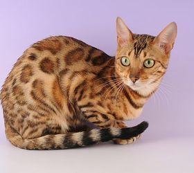 奥西猫|奥西猫