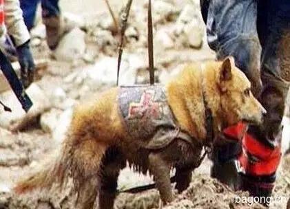 差点被安乐死的小宠物们  在人类遇到危难时刻  却变成英雄9