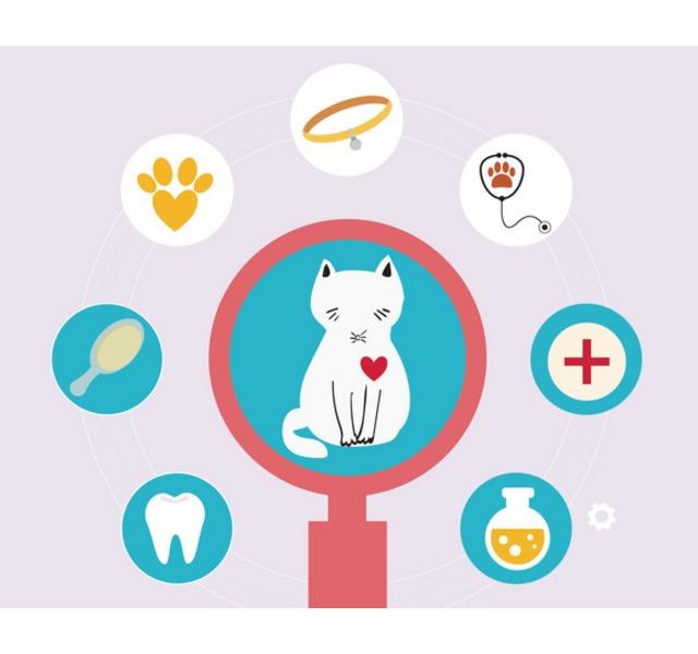 宠物医疗功能开通