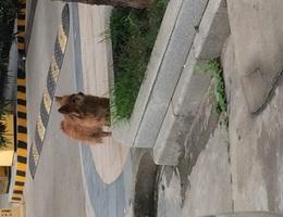 发现这只可怜小狗就拍照了而已。...