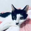 3个月大小公猫 求好心人领养