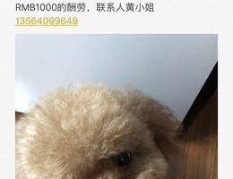 求助,寻找爱犬,爱犬于5月22日...