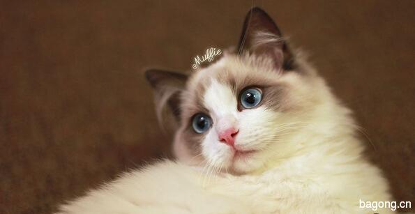 教您快速辨别猫星人品种!!!3