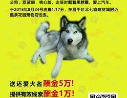 5万寻狗,名字小迪,10岁,叫名...