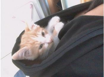 一只小猫咪寻找好归宿