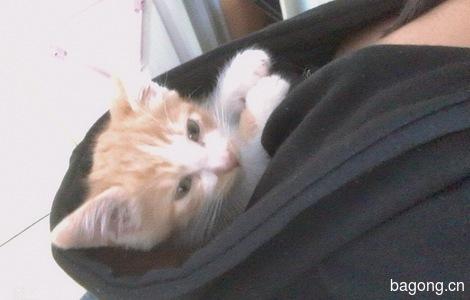 一只小猫咪寻找好归宿0