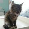 愁啊愁!!!又救了七只小奶猫。继续给猫咪们找家。联系13701116451猫姥姥,谢谢!