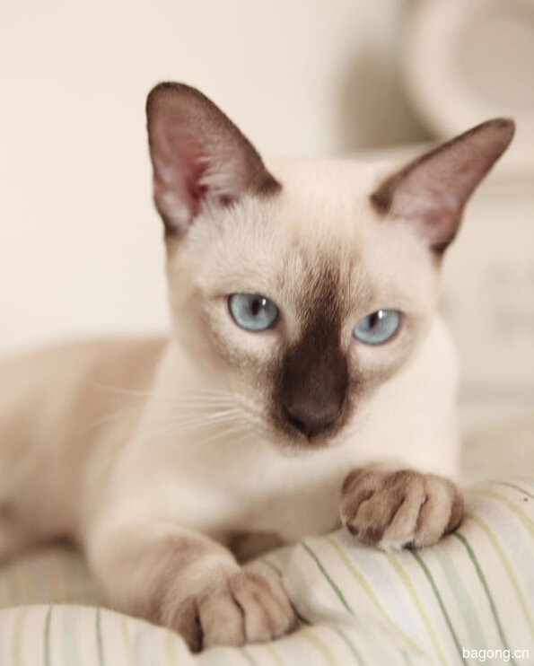 教您快速辨别猫星人品种!!!1