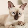 教您快速辨别猫星人品种!!!