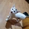这只小猫很健康很活泼,很需要主人