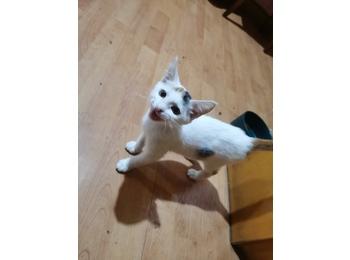 这只小猫很健康很活泼...