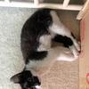 四个月的猫咪求领养