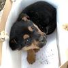 捡到一只流浪狗求收养