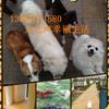 北京家庭式庄园散养  长期养老托管可接送宠物寄养