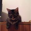 姐救助的猫猫,可爱的小黑狸
