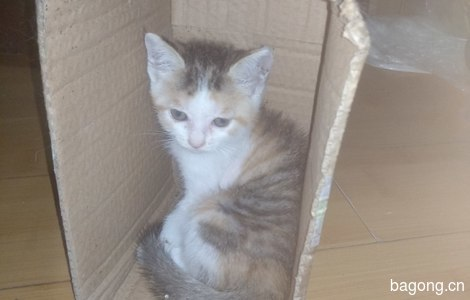 健康活泼的小猫咪免费领养了3
