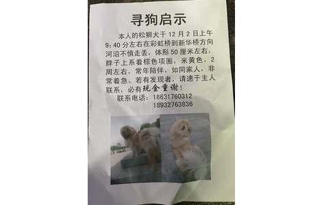 寻狗启示,本人的松狮犬于12月2...