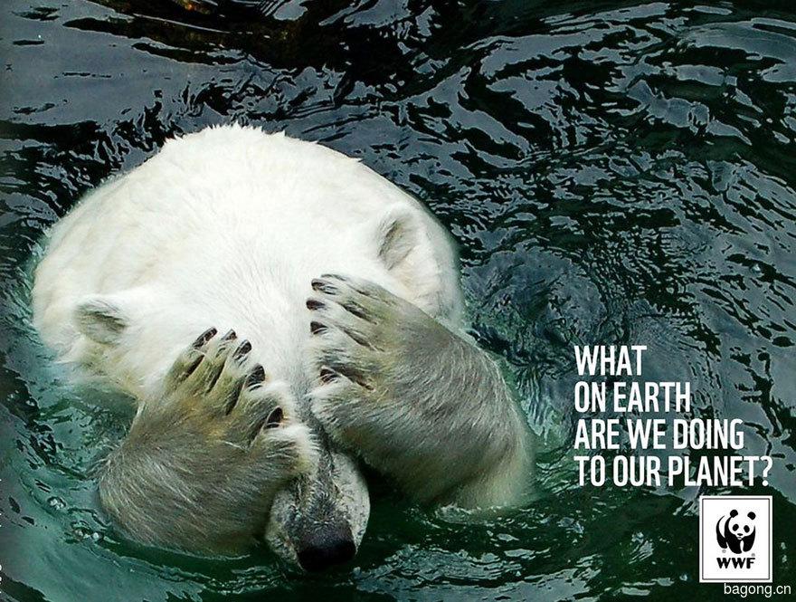 動物廣告242.jpg