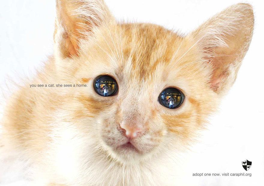 33个动物公益广告震撼人心30