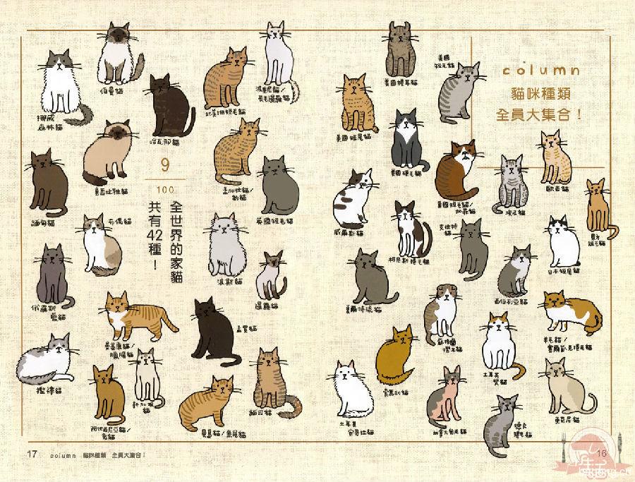 猫奴必懂的100 个喵喵秘密 11