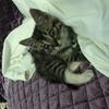 只要条件合适都可以免费领养我的猫,要养过宠物喜欢猫咪,想找一个好主人。