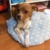 想为6个月大小流浪狗在上海找个家