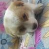 我捡到一只小流浪狗,希望有人能带它回家。