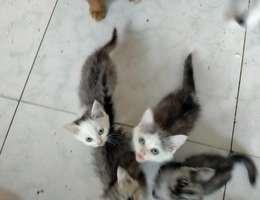 家中母猫生了四只小猫,有一半加...