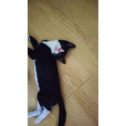 有两只四个月大的小黑猫,驱过虫还没有打疫苗,因工作原因不能养了,有好心人抱走么